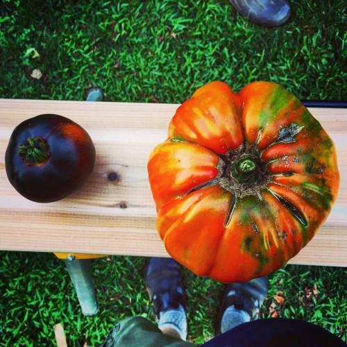 Bueti tomato