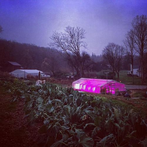 Purdy's Farmer & the Fish greenhouse at dusk