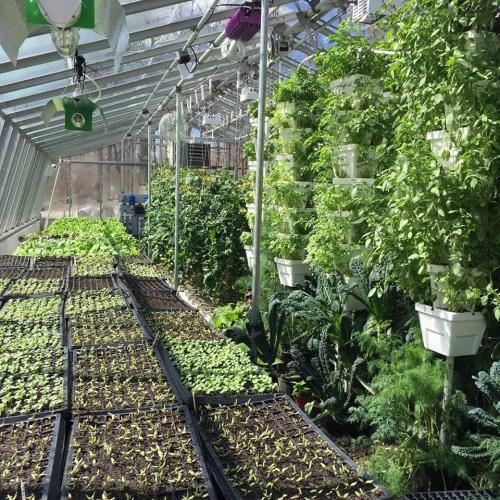 Inside greenhouse at Purdy's farmer & the Fish