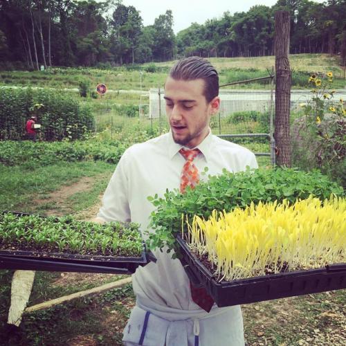 Mike bringing in greens
