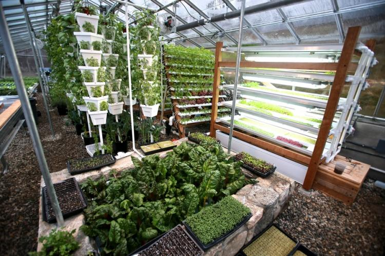 Greenhouse plants Purdys Farmer and the Fish