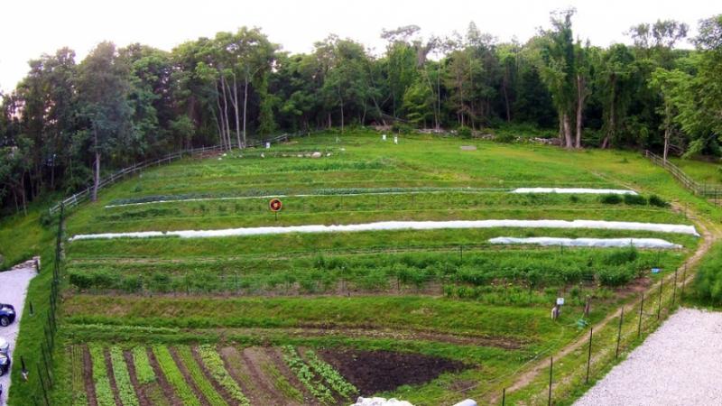 Farm fields Purdys Farmer and the Fish