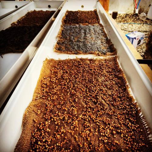 Purdy's Farmer & the Fish farm seeding